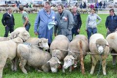 Povos que olham e que discutem no mercado dos carneiros de Stans Fotos de Stock Royalty Free