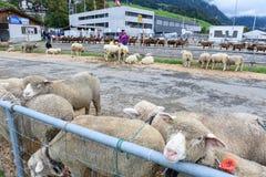 Povos que olham e que discutem no mercado dos carneiros de Stans Imagens de Stock