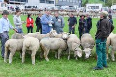 Povos que olham e que discutem no mercado dos carneiros de Stans Foto de Stock Royalty Free