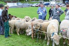 Povos que olham e que discutem no mercado dos carneiros de Stans Fotografia de Stock Royalty Free