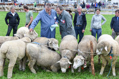 Povos que olham e que discutem no mercado dos carneiros de Stans Imagem de Stock