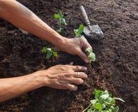 Povos que plantam a árvore nova no solo da sujeira com uso da ferramenta de jardinagem fotos de stock royalty free