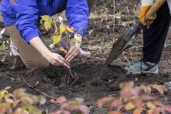 Povos que semeiam a árvore nova no solo fresco Fotografia de Stock Royalty Free
