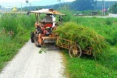 Povos que trabalham na exploração agrícola Imagem de Stock