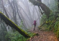 Povos que trekking em uma floresta imagens de stock royalty free