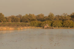 Powódź ciągnik Fotografia Stock