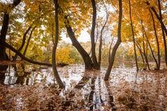 Powódź w jesień lesie obraz stock