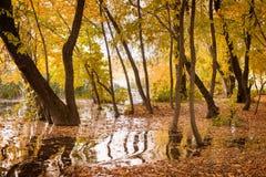 Powódź w jesień lesie fotografia stock