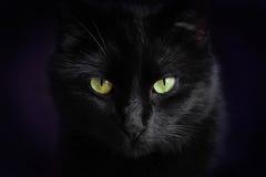 Poważny kot Obrazy Stock