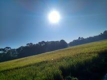 Poważny słońce Zdjęcie Stock