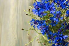 Powabni pogodni modraków kwiaty Fotografia Stock