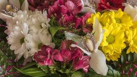 Powabny bukiet kolorowi kwiaty Zdjęcie Stock