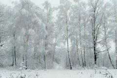 Powabny drewno zakrywa z śniegiem Piękny czas rok Puszysty opad śniegu szczegółowa artystyczne Eiffel rama France metalicznego po Obraz Royalty Free