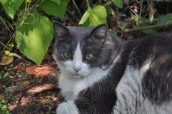 Powabny kot i sadło - atrakcyjny (zwierzęta i nat Fotografia Royalty Free