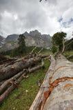 Powalać drzewa Obraz Royalty Free