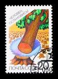 Powalać drzewo, Zobaczył ostrze, natury konserwaci seria około 1990, royalty ilustracja