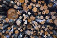 Powalać drzewa Fotografia Stock