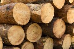 Powalać drzewa w lesie Obrazy Royalty Free