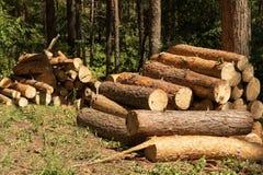 Powalać drzewa w lesie Zdjęcia Stock