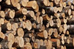 Powalać drzewo brzozy Fotografia Stock
