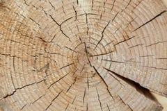 Powalać fiszorek drzewo Zdjęcia Royalty Free