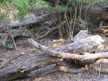 Powaleni drzewa i kamienie zdjęcie stock