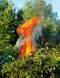 powaleni pożarniczy drzewa Obraz Stock