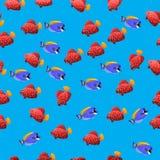 Powder Blue Tang fish. Very high quality original trendy vector seamless pattern with Powder Blue Tang fish Stock Photo