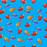 Powder Blue Tang fish. Very high quality original trendy vector seamless pattern with Powder Blue Tang fish Royalty Free Stock Photo