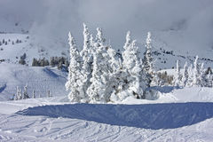 Powder Mountain, Utah Stock Image