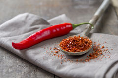 Powdered chilli on spoon Stock Images