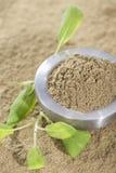 Powdered Sage Royalty Free Stock Image