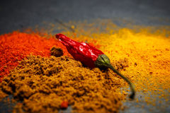 Powdered Spices Royalty Free Stock Photo