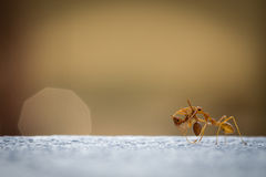 Power Ants Working Royalty Free Stock Photography