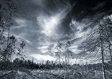 The power of darkness. Paludal mixed forest in west of Russia Stock Photos