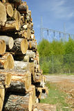 Power from earth. Closeup for stack of cut trees with electricity wires in background Stock Images