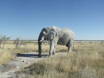 Powerfull elephant background Royalty Free Stock Photo