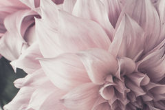 Power flower soft tone Royalty Free Stock Images