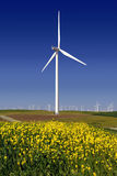 Power Generating Windmills. Stark White Electrical Power Generating Windmills, Turbines on Rolling Hills of Green Wheat and Yellow Wildflowers, Rio Vista royalty free stock images
