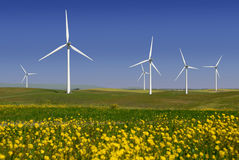 Power Generating Windmills. Stark White Electrical Power Generating Windmills, Turbines on Rolling Hills of Green Wheat and Yellow Wildflowers, Rio Vista royalty free stock photography