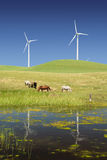 Power Generating Windmills and Livestock. Reflection of Stark White Electrical Power Generating Windmills, Turbines on Rolling Hills of Green, Livestock, Cattle stock photo
