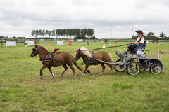 Power horse competition Stock Images