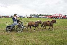 Power horse competition Stock Photography