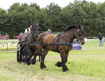 Power horse competition Royalty Free Stock Photo