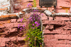 Power of life, ftowers growing through the wall Royalty Free Stock Photo