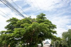 Power line in the big tree. stock photos