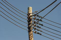 Power line cables on the blue sky background Royalty Free Stock Photo