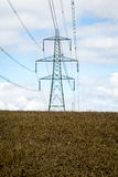 Power line in a cereal field Stock Image