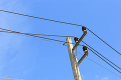 Power line conductor Stock Images