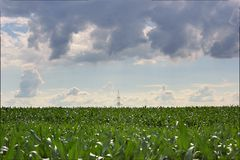 Power Line On Corn Field Royalty Free Stock Images